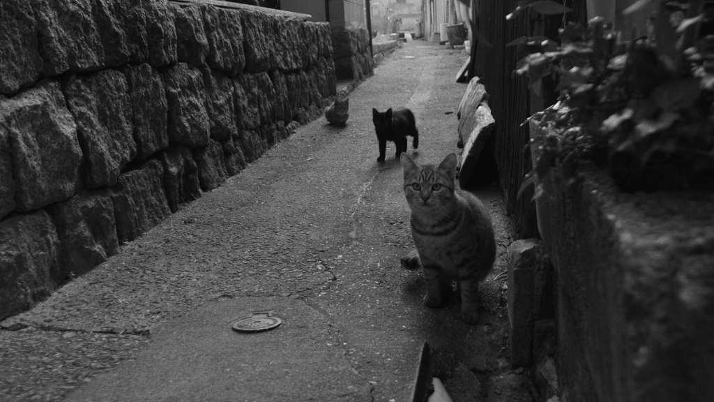 The Famous Cats of Ushimado, Inland Sea (2018)